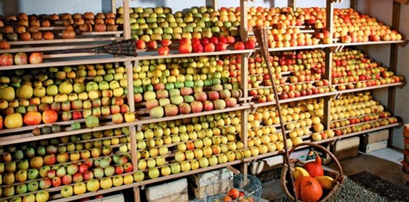 étagère pour conservation et stockage des pomme en hiver dans le fruitier