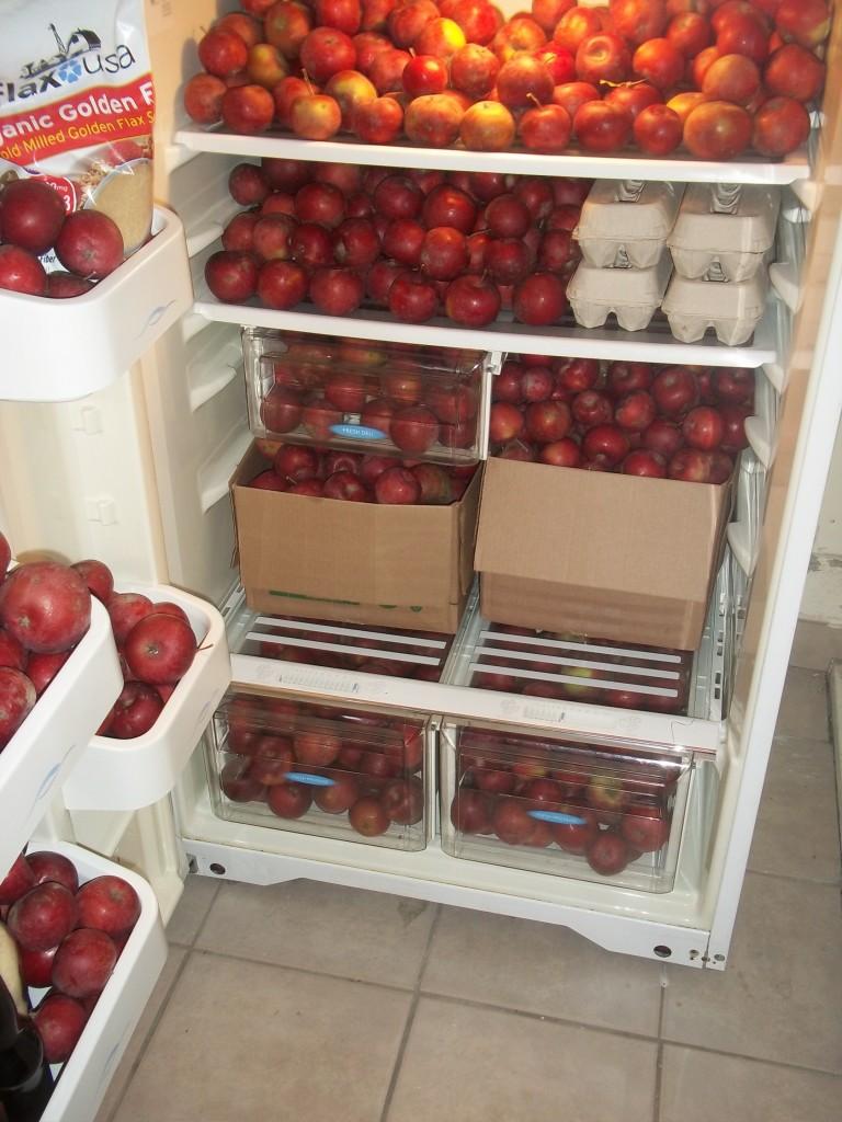 conservation des pommes au réfrigérateur ou frigo