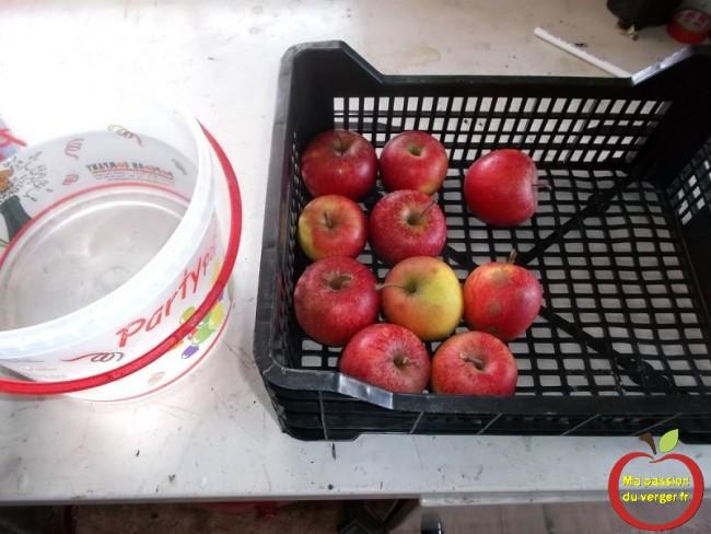 comment faire pour conserver les pommes au fruitier