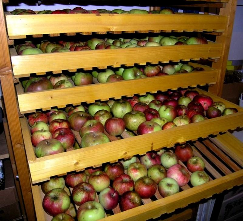 Ernten_und_Lagern_von_Obst-verkl - stockage des pommes en hiver, dans le fruitier