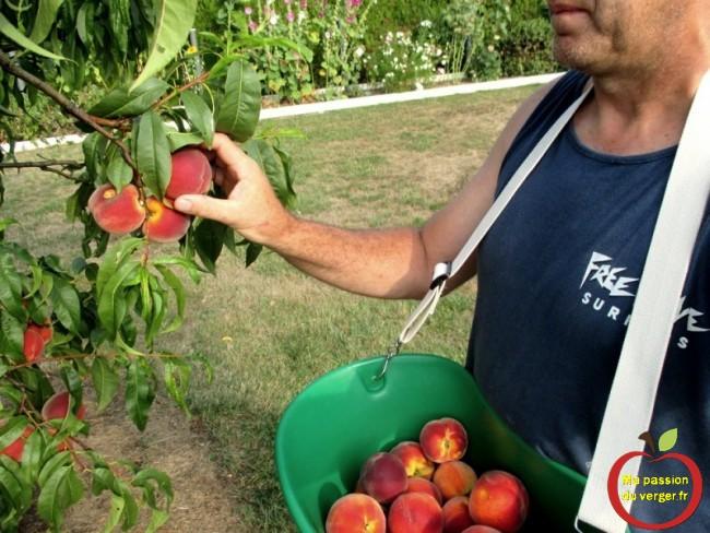 Panier de cueillette fruits Triangle peche-nectarine-abricot