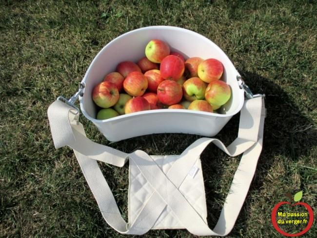 Le panier de cueillette des fruits du verger