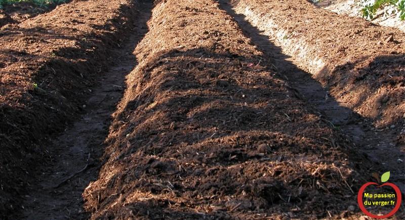 comment préparer la terre pour plantation de fraise sur bache en butte