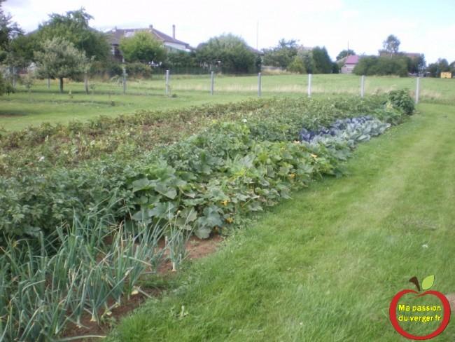Champs de pommes de terre avant la récolte