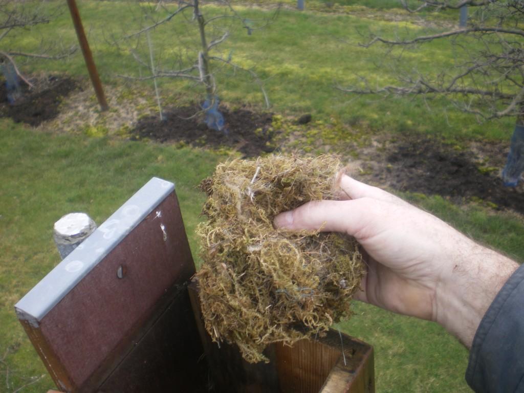 Sortir l'ancien nid, pour faire de la place, dans le nichoir.