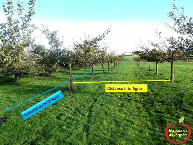 distance de plantation demi-tige création verger-- créer un verger- verger familiale- petit verger- plantation arbre fruitiers