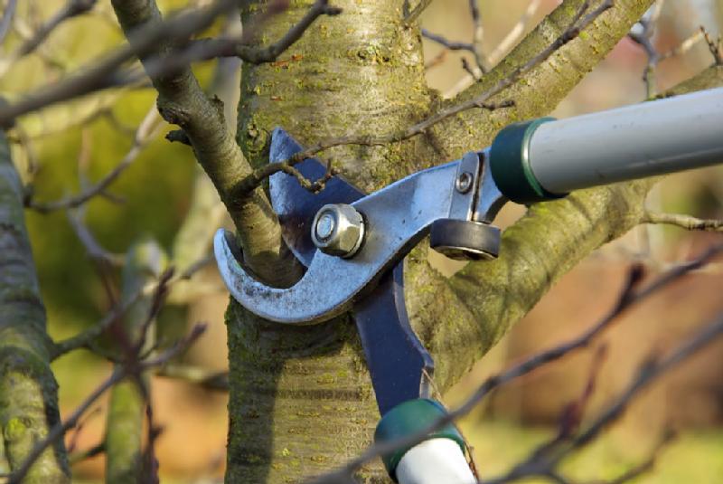Taille-des-arbres-fruitiers en hiver