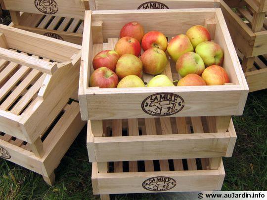 conservation-pommes-poires-540x405