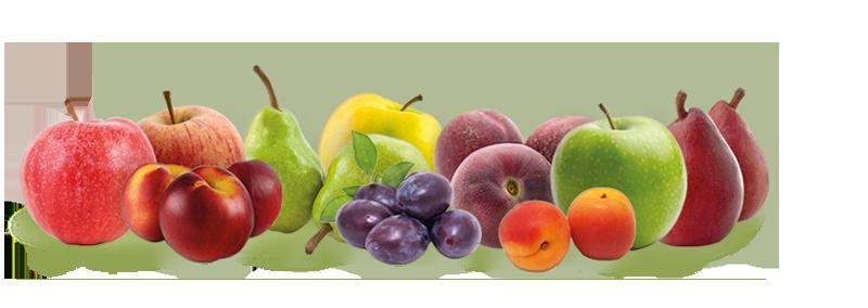 fruitsPommes