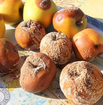 contrôle des fruits au fruitier pour enlever les pommes pourries