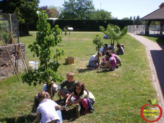 entretien des arbres fruitiers par les élèves au verger école