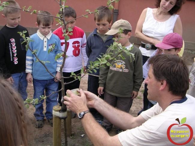 Formation des élève à l'arboriculture