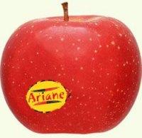 pommesese