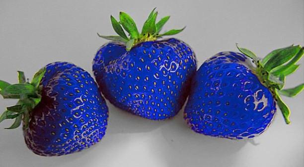 demain, la fraises_bleues-