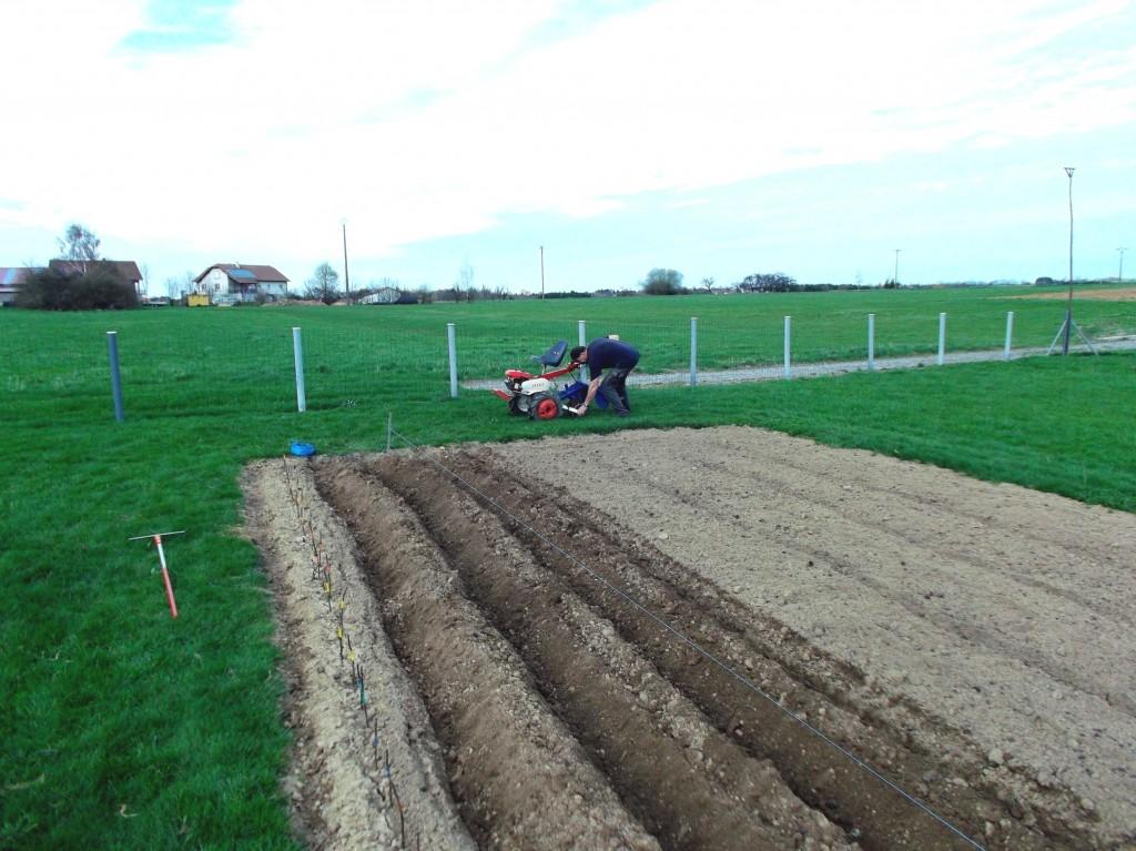 La première rangée de pommes de terre, est plantée avec une ficelle