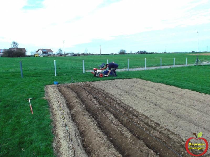 Planter mes pommes de terre ma passion du verger - Quand planter les pommes de terre ...