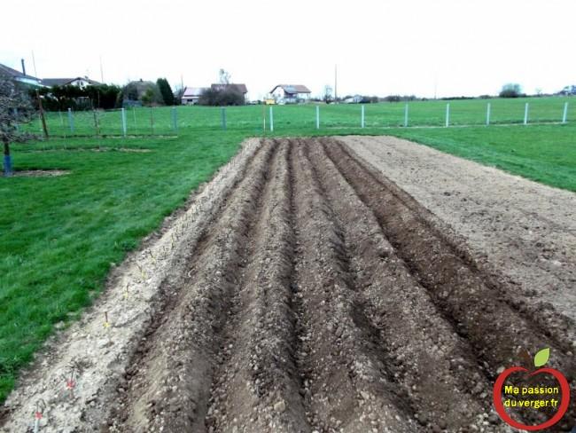 la plantation des pommes de terre en buttes- avantage des pomme de terre sur butte-