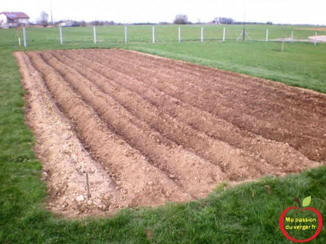 comment faire la plantation en buttes des pommes de terre -