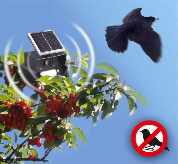 Comment chasser les oiseaux des arbres fruitiers - Comment faire fuir les oiseaux ...