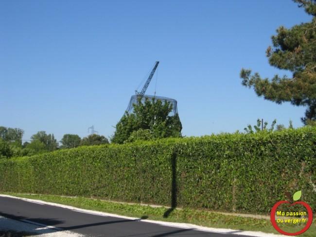 filet anti-insecte la mise en place pour les grands arbres fruitiers est très difficile ou impossible