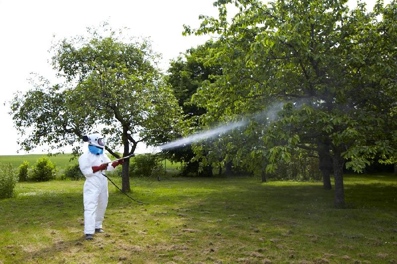 Lutte chimique contre la mouche et les vers dans les cerises