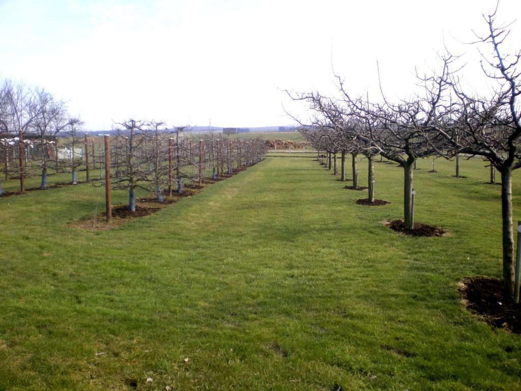 fumure pour les arbres fruitiers au verger pour augmenter le taux de sucre dans les poires williams