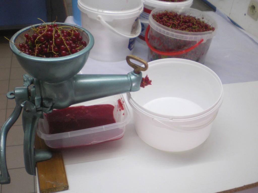 Extraction du jus de groseille, avec le moulin à fruits.
