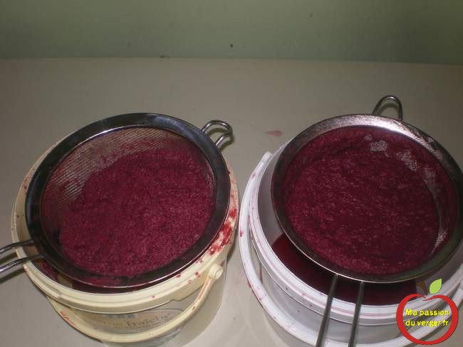 le marc de groseille après la clarification - pulpe vin de groseille- jus de groseille