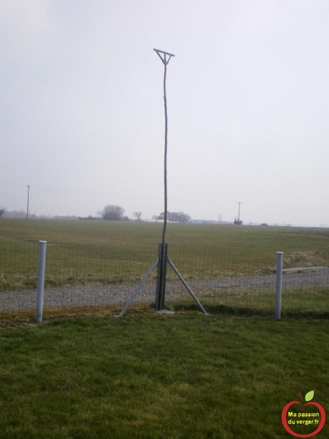Installation de perchoirs à rapace, qui est généralement placé à un endroit isolé du verger ou près des galeries ou entre les arbres