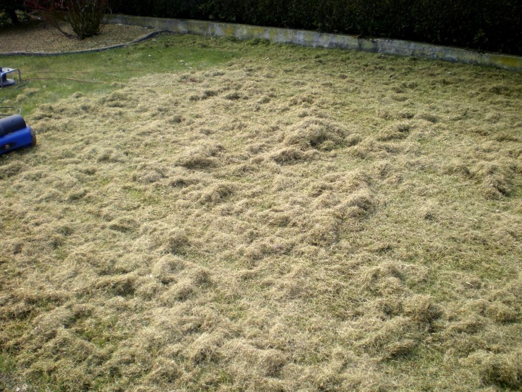 résultat de la scarification de la pelouse ou du gazon