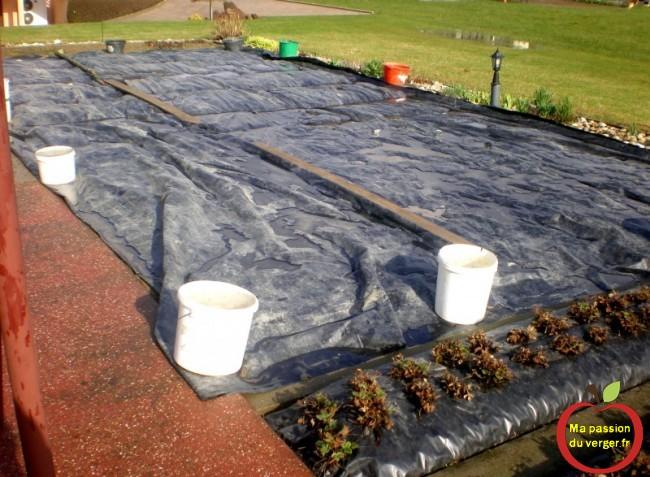 astuce contre les mauvaises herbes au potager - couvrir le potager par temps de pluie-