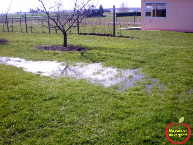Le verger est très humide, suite au pluis de printemps.