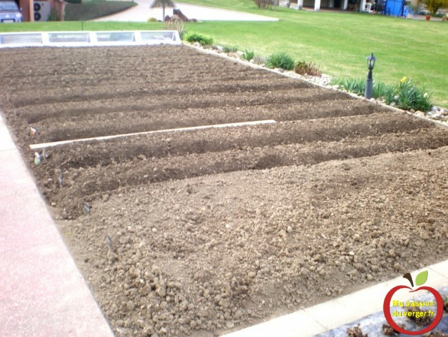 quand semer le potager- semer le potager bio- semer avec ou sans la lune