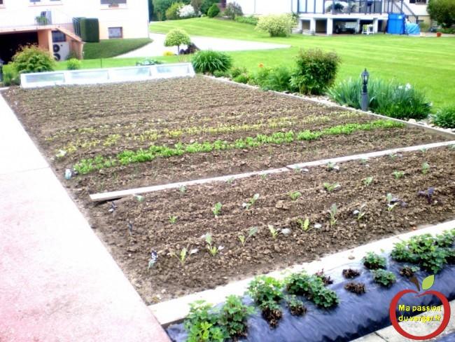 planter le potager avec la lune- comment planter les légumes au potager- semences bio