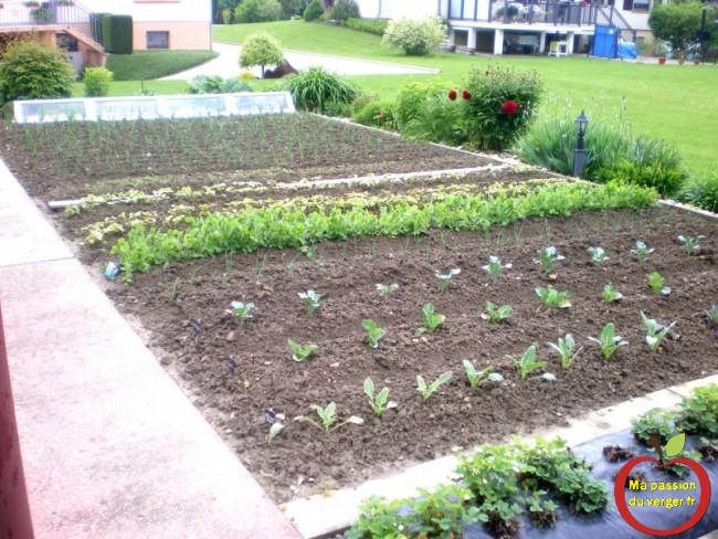 faire pousser des légumes- manger des légumes du jardin- vivre en autarcie- légumes pas cher- semence bio pas cher