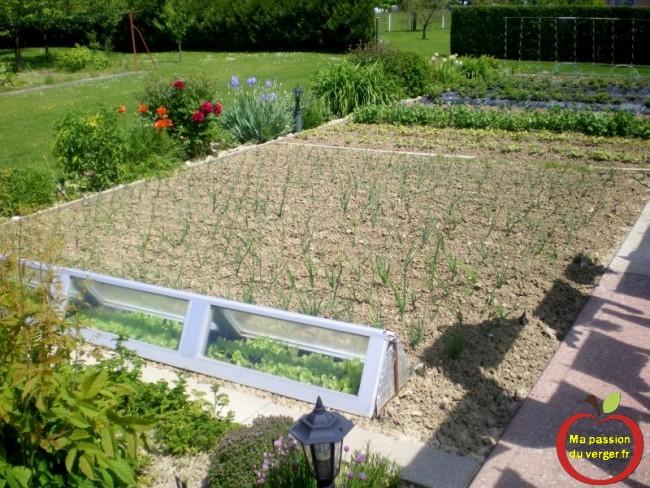 première récolte au potager- légumes bio du jardin bon pour la santé- réussir un potager - légumes bio pas cher.