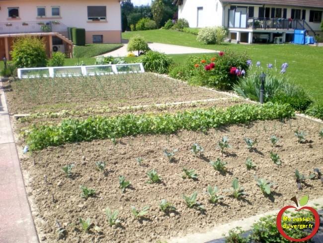 arrosage du potager- comment biner le potager- enlever les mauvaises herbes au jardin potager-