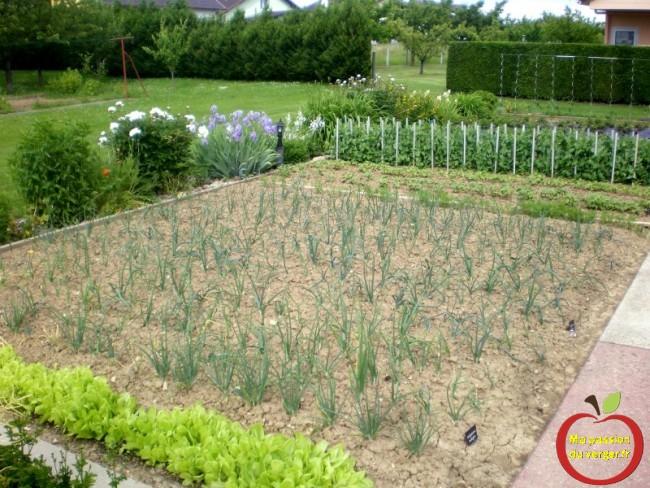 belle récolte au potager- les maladies au potager- vivre du potager- bon légumes du potager