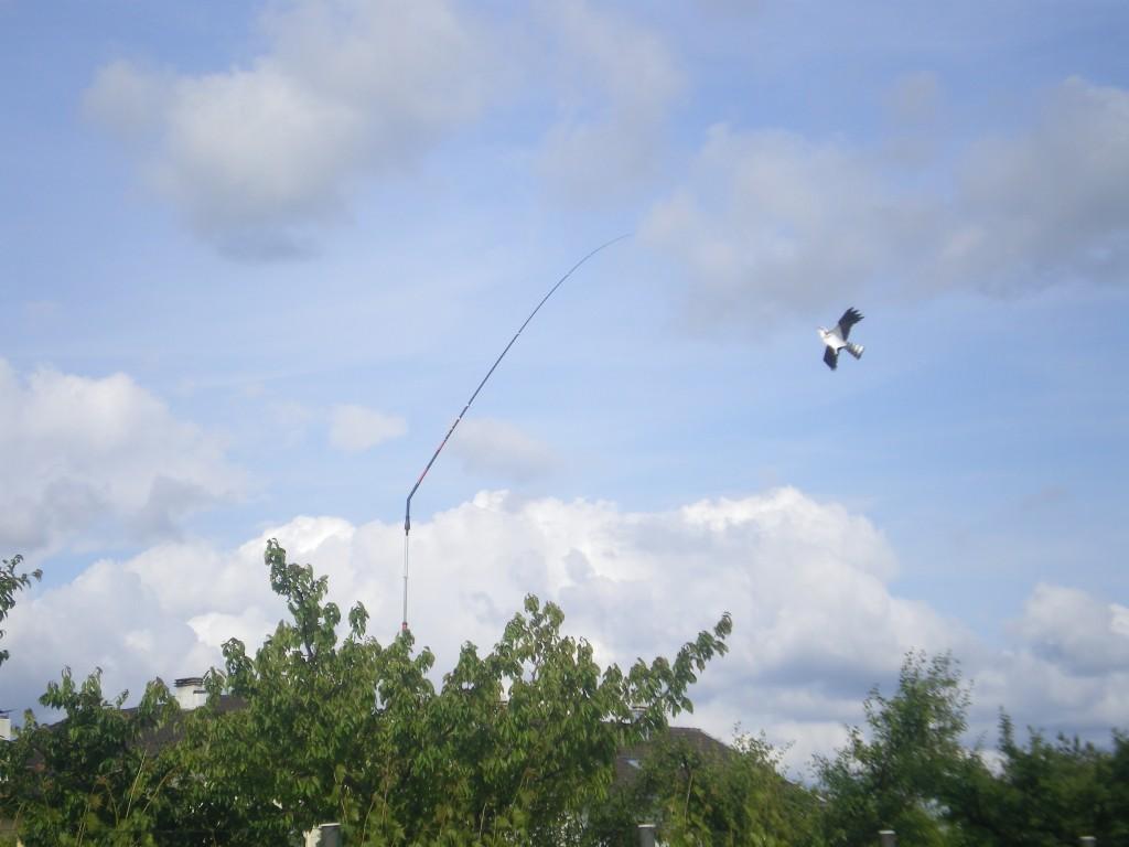 Instalation cerf-volant effaroucheur dans mon cerisier avec mat de rotation 360°
