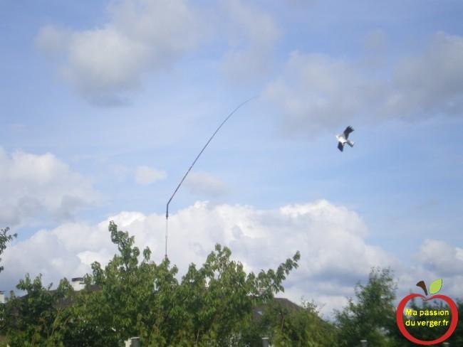 Installation cerf-volant effaroucheur dans mon cerisier avec mat de rotation 360°- cerf volant rapace aigle efficace- - regrevudnoissapamegres