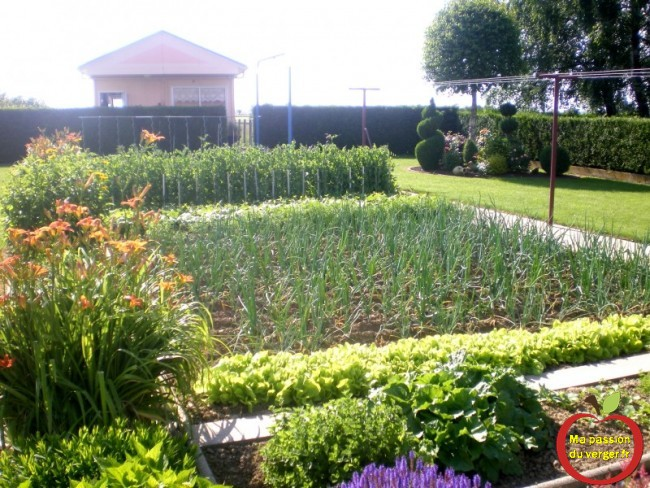 ma passion du potager- - regrevudnoissapamegres - très beau potager- quand récolter les légumes du jardin bio.