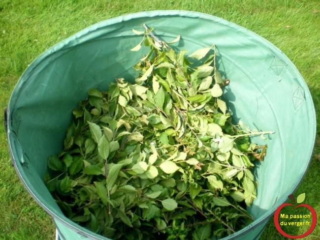 Un demi-sac de 200 litres de nouvelles pousses coupées par arbre, en taille en vert.