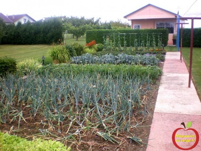 la récolte au potager- jardin partager- potager partagé- des bon légumes bio pas cher