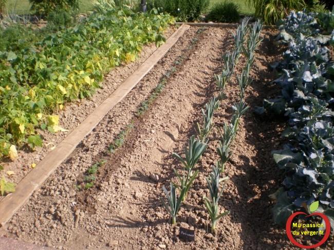 repiquage après récolte- comment augmenter les récolte de légumes bio- faire pousser des beau légumes pas cher