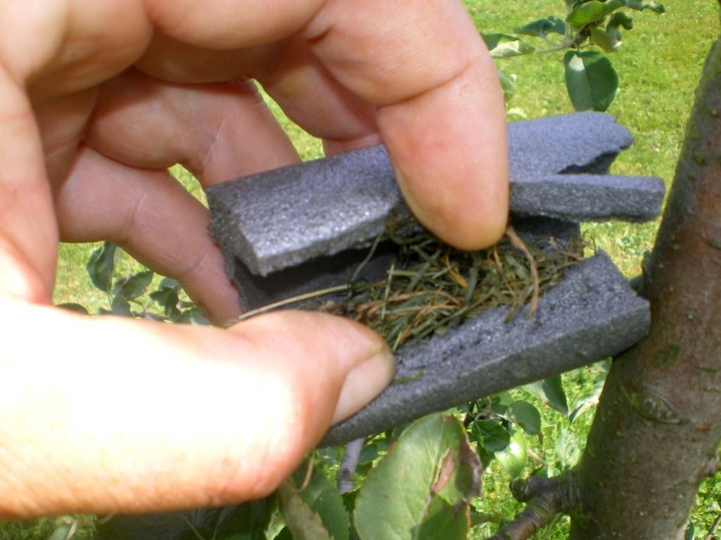 Il faut ouvrir l'abri à forficule et mettre un peut de foin ou de la paille et l'installer dans l'arbre.