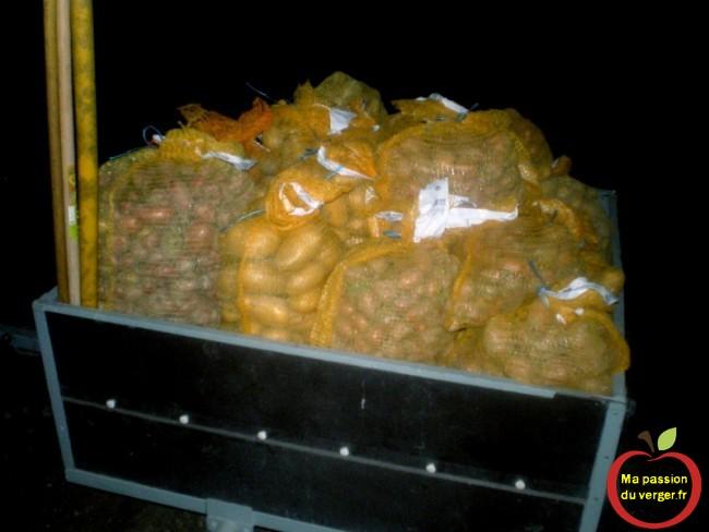 recolte de pommes de terre