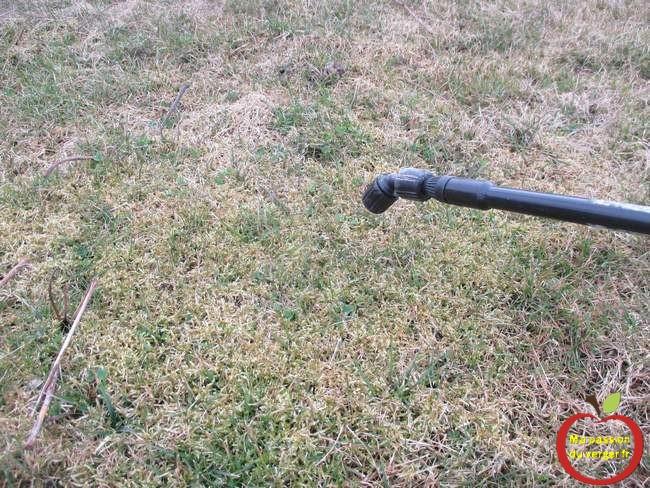 Pulvériser l'anti-mousse sur les endroits du gazon avec de la mousse