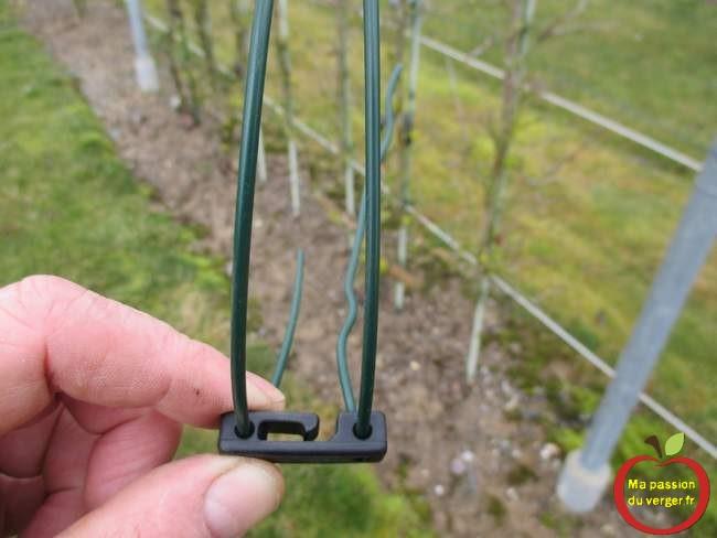 drahthalter fixer avec fil sur poteaux palissage- support fils de palissage.