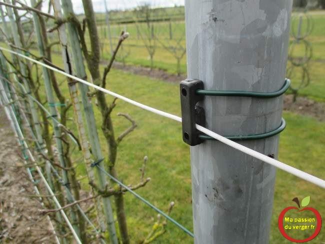 assurer une plus haute résistance aux aléas climatique au fils de palissage- fixation parfaite du fil de palissage.