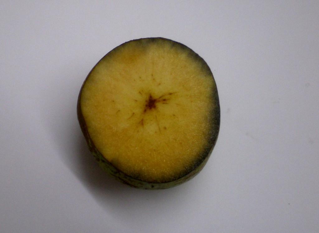 Le bon stade de récolte des poires pour la transformation et la distillation, après le test à la solution iodée.